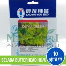 "Selada Butterhead Hijau – Known You Seed ""OLIVIA GREEN"""
