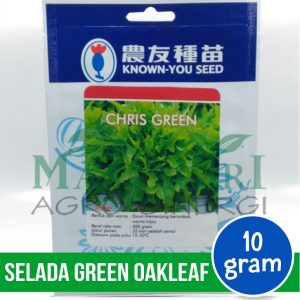 "Selada Green Oakleaf – Known You Seed ""CHRIS GREEN"""