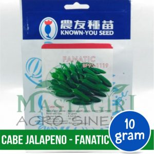 "Cabe Jalapeno – Known You Seed ""FANATIC"""