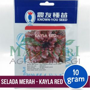 "Selada Merah – Known You Seed ""KAYLA RED"""