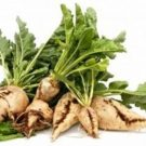 Tropical Sugar Beet