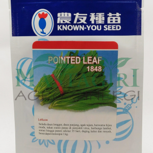 "Selada Siomak – Known You Seed ""POINTED LEAF"""