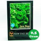 Selada Green Butterhead JAVA ROSE New Day Seed